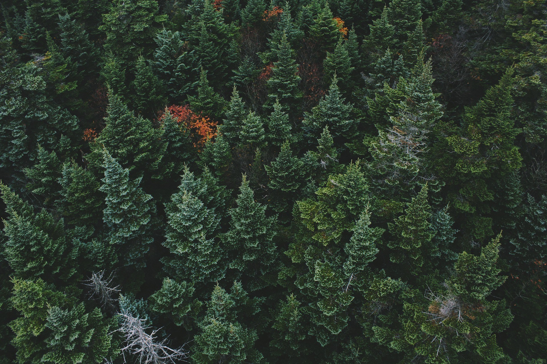 Evergreen Online Course Materials