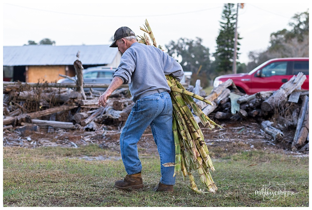 Gathering Cane - A Florida Cane Grinding - Ashley Corinne Photography
