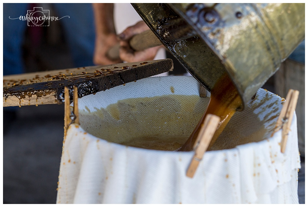 The Best Moment - A Florida Cane Grinding - Ashley Corinne Photography