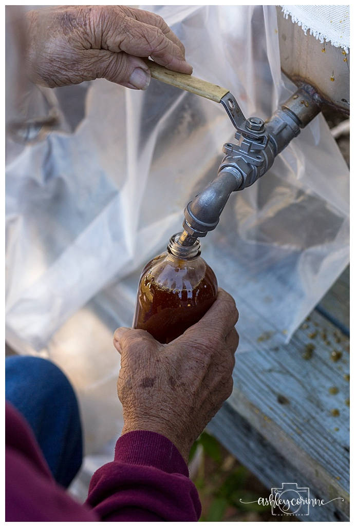 Bottling Syrup - A Florida Cane Grinding - Ashley Corinne Photography