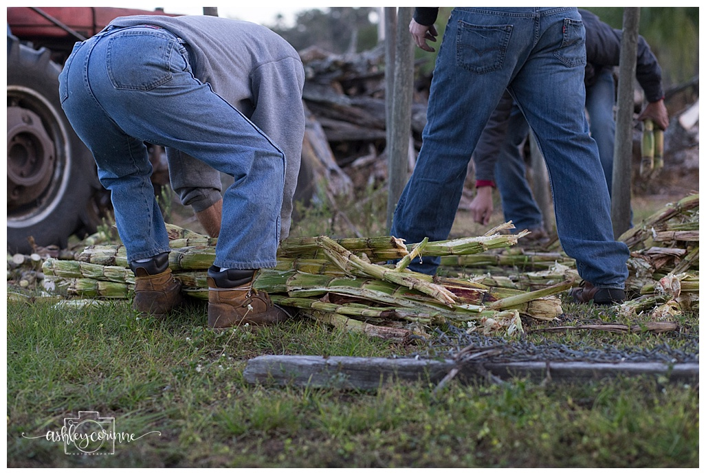 Gathering - A Florida Cane Grinding - Ashley Corinne Photography