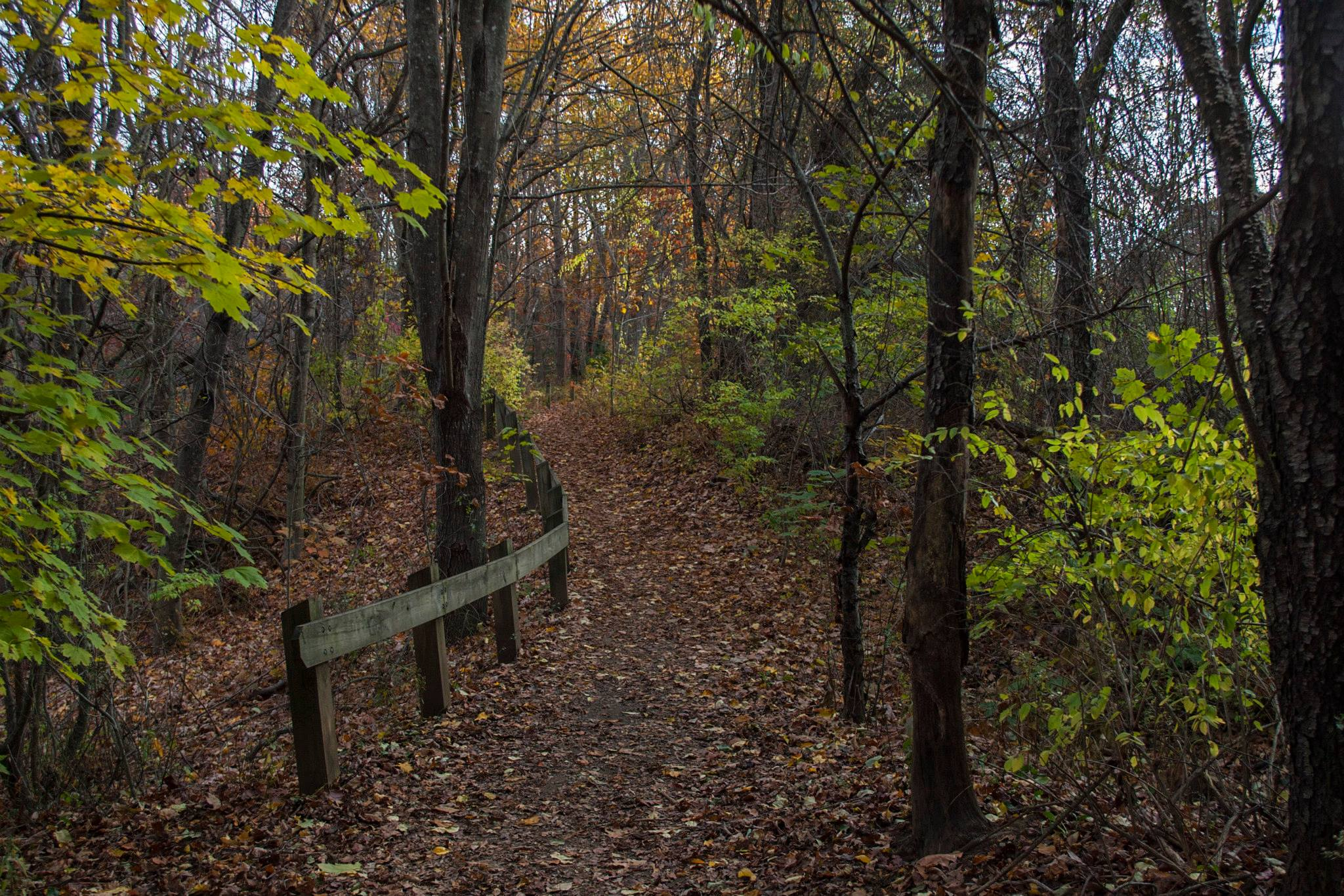 Hinckley Park offers quiet trails, ideal for dog walking