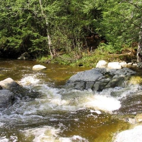TROUT BROOK NATURE PRESERVE - Managed by SPLT
