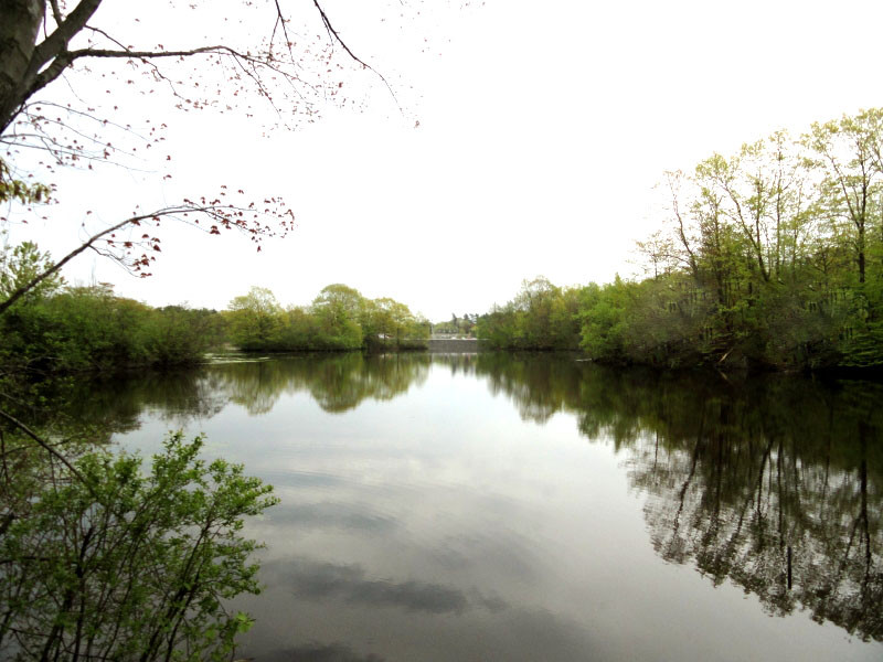 Clarks Pond, as viewed from the Clarks Pond Trail