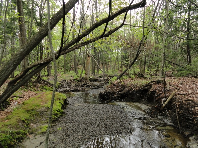 South branch of the Long Creek (photo by Center for Community GIS)