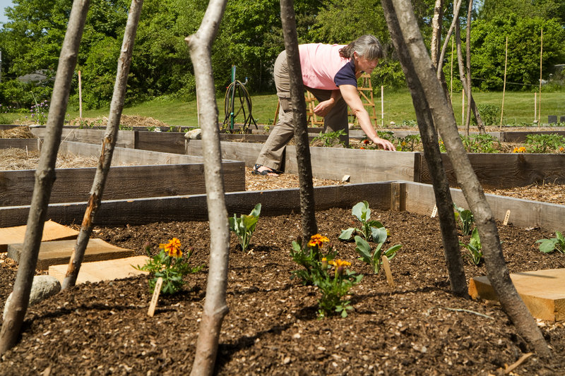 """The South Portland Community Garden Collective is hosting an """"Open Gate Welcome"""" this September at the Hamlin School Community Garden. The public is welcome to visit the garden to learn how an organic community garden gets started, try preserves made from garden produce and learn about the Harvest for the Hungry program."""