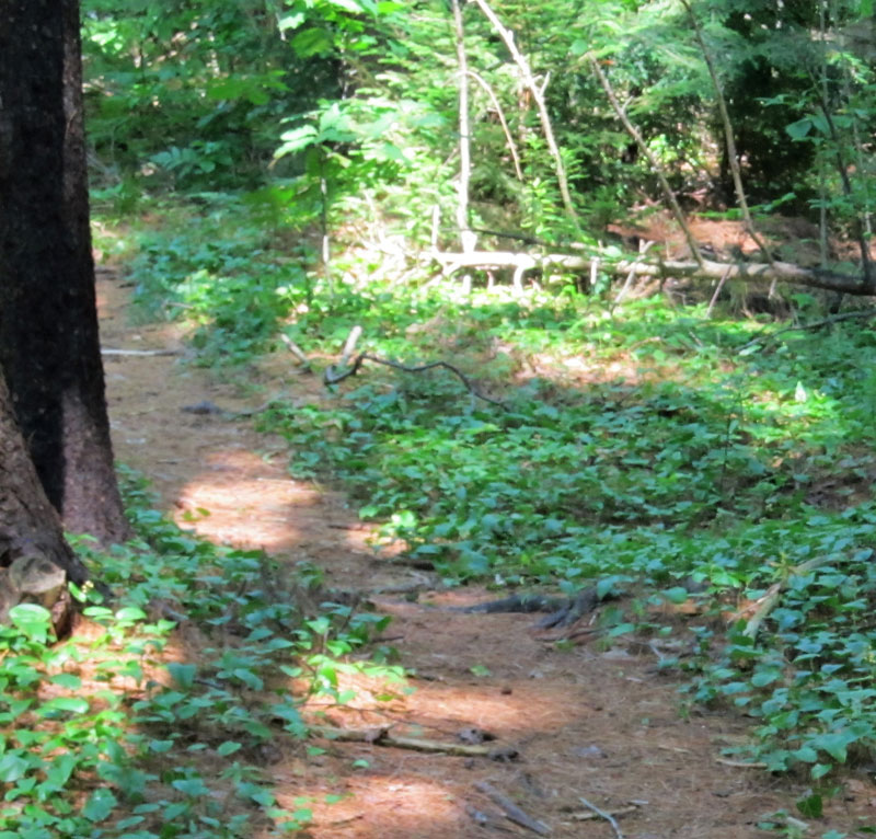 DOWS WOODS TRAIL - Managed by SPLT