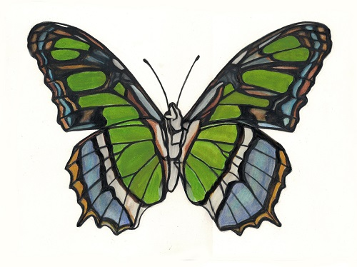 green and blue moth