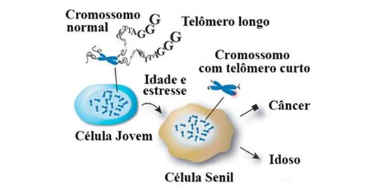 Telômero