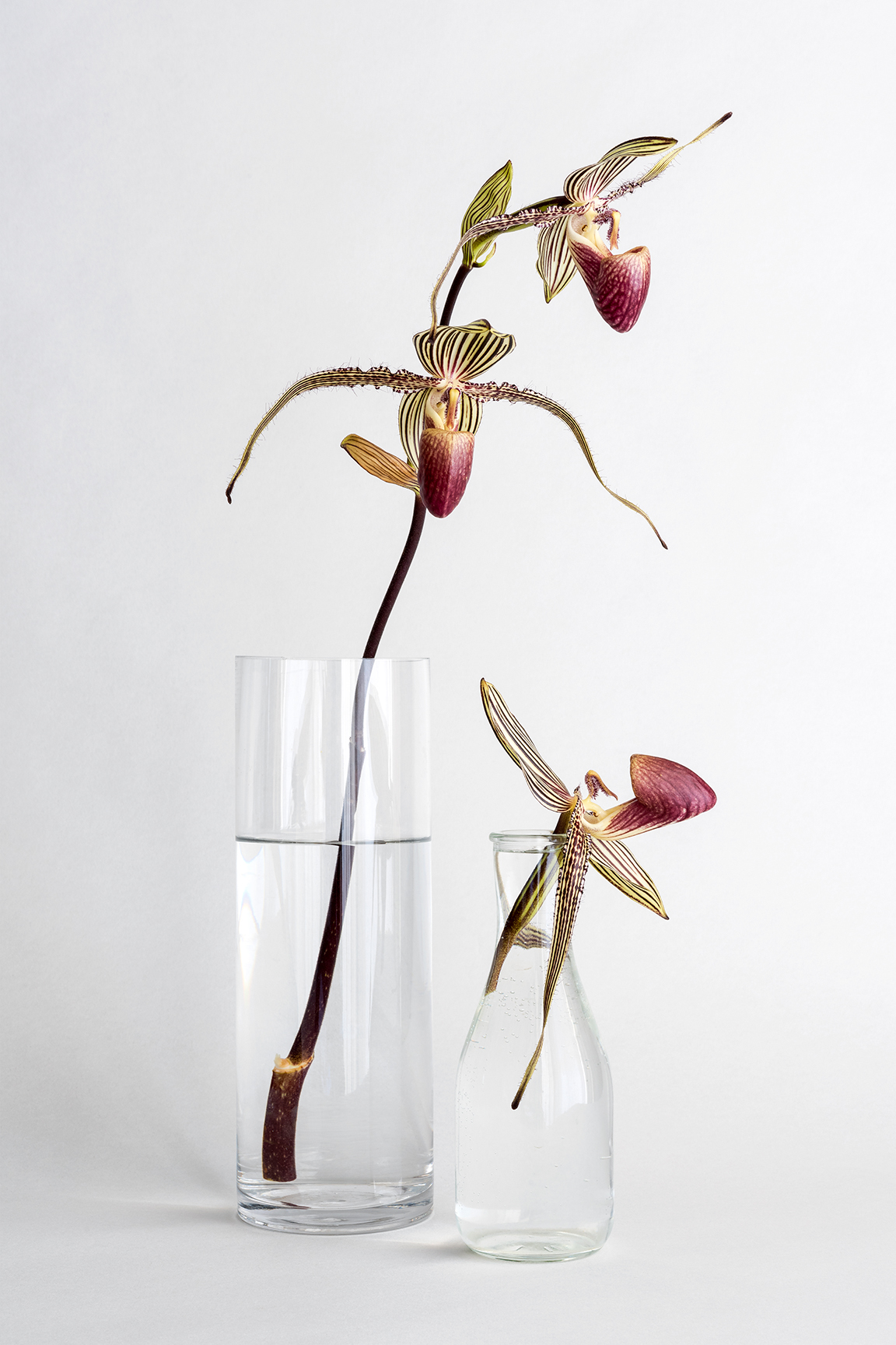 Striped Orchids in Glass