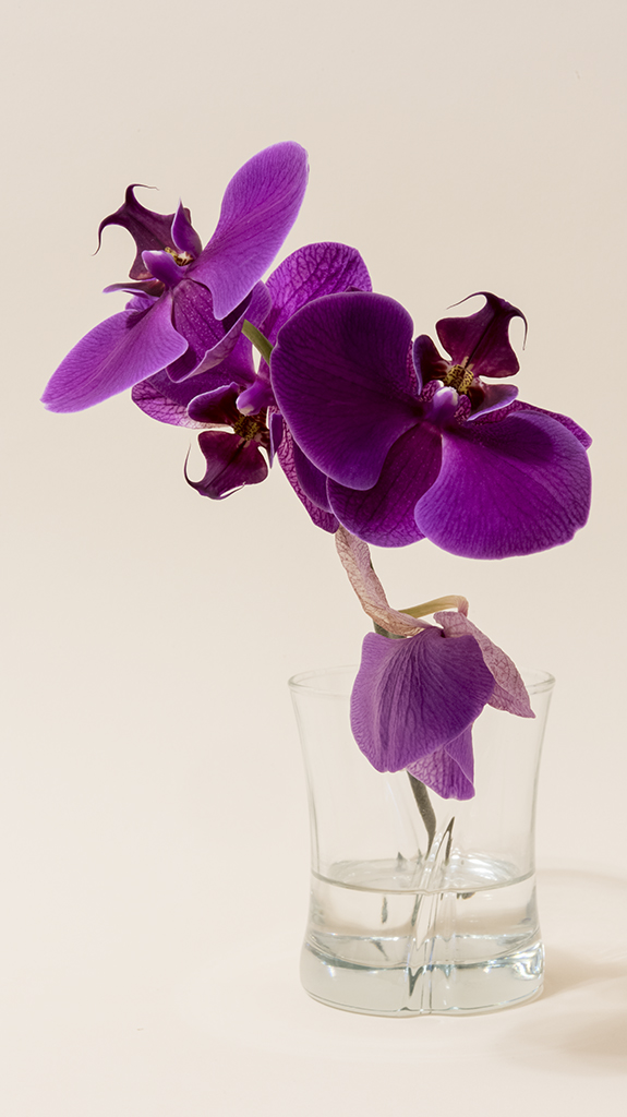 Purple Orchid in Glass