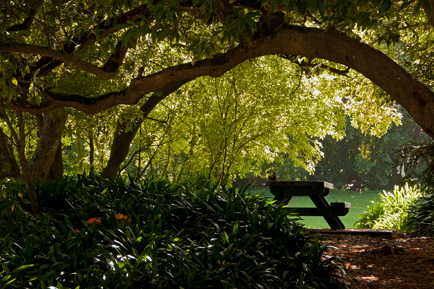 Golden Gate Park Bench