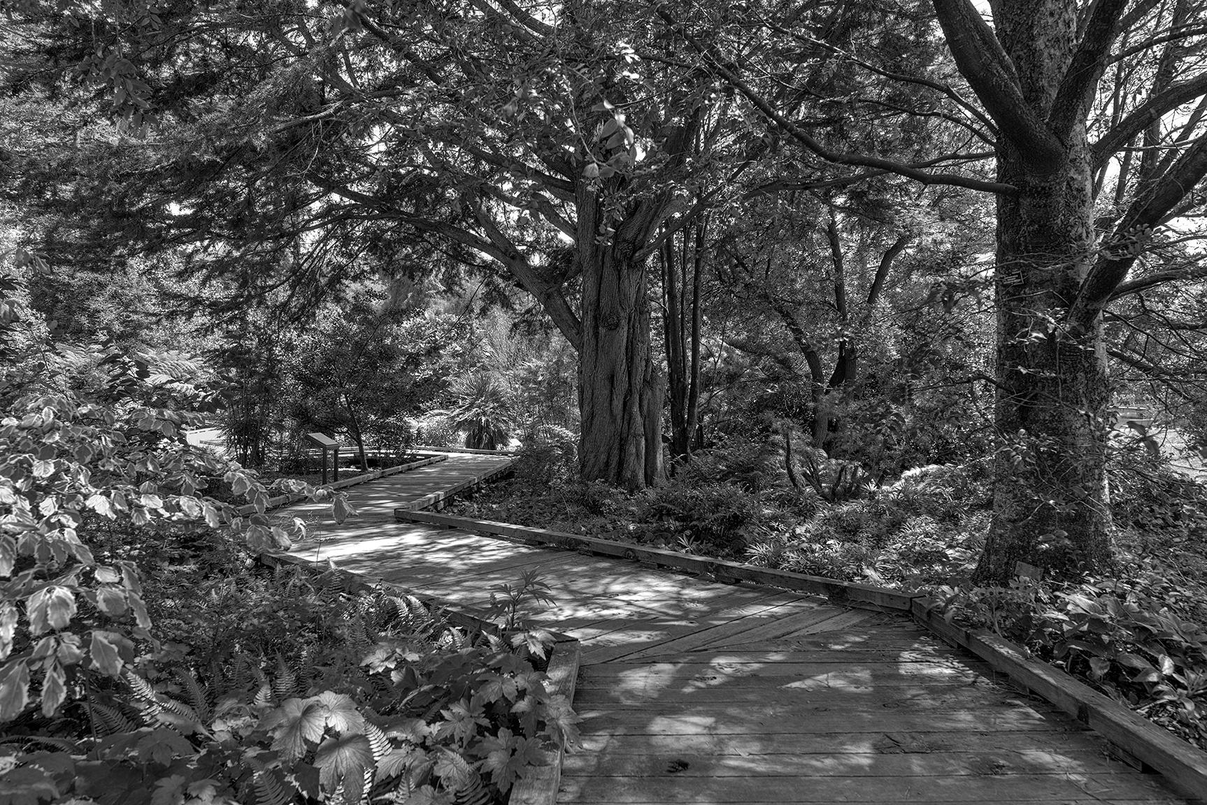 Arboretum Path