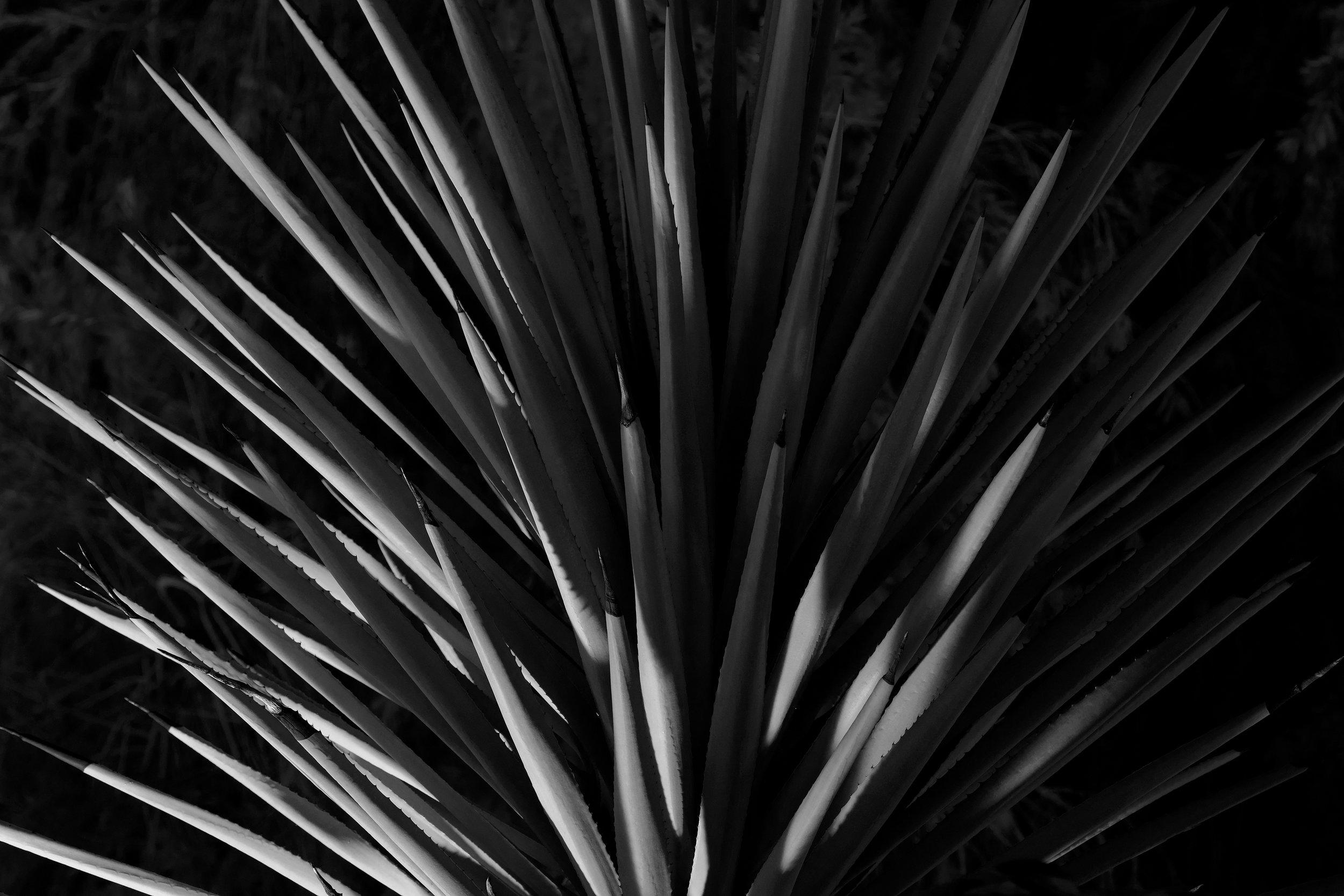 Spiky Night
