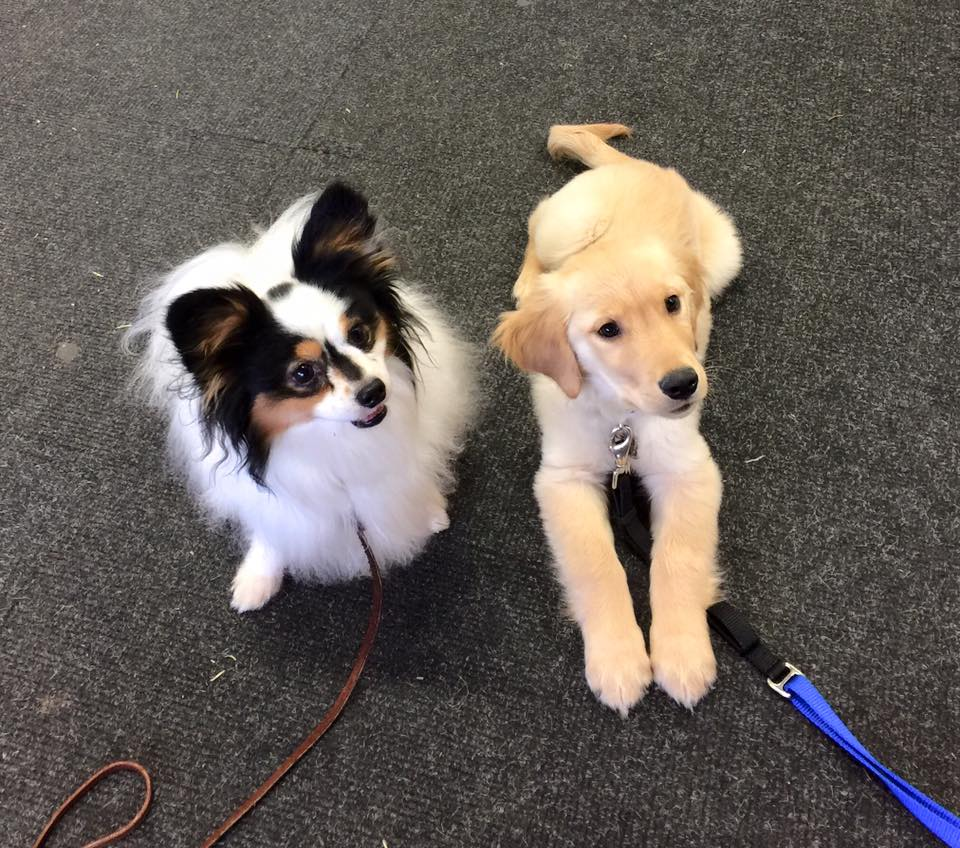 Archived newsletters for Training You to Train Your Dog by Helen Dohrmann for owners in Redmond, Bellevue, Sammamish, Kirkland, Medina and Issaquah, WA.