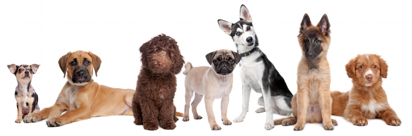 Group dog training classes and group puppy training classes in Redmond, Bellevue, Sammamish, Kirkland, Medina and Issaquah, WA.