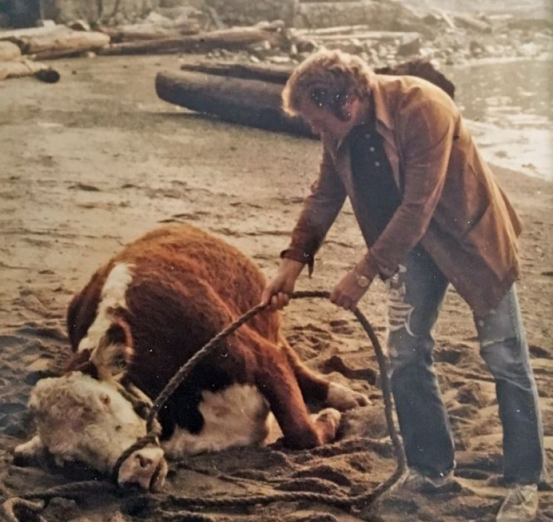 garth-lawrence-trying-to-coax-an-exhausted-cow-from-a-west-vancouver-beach-september-1976-photo-je.jpg