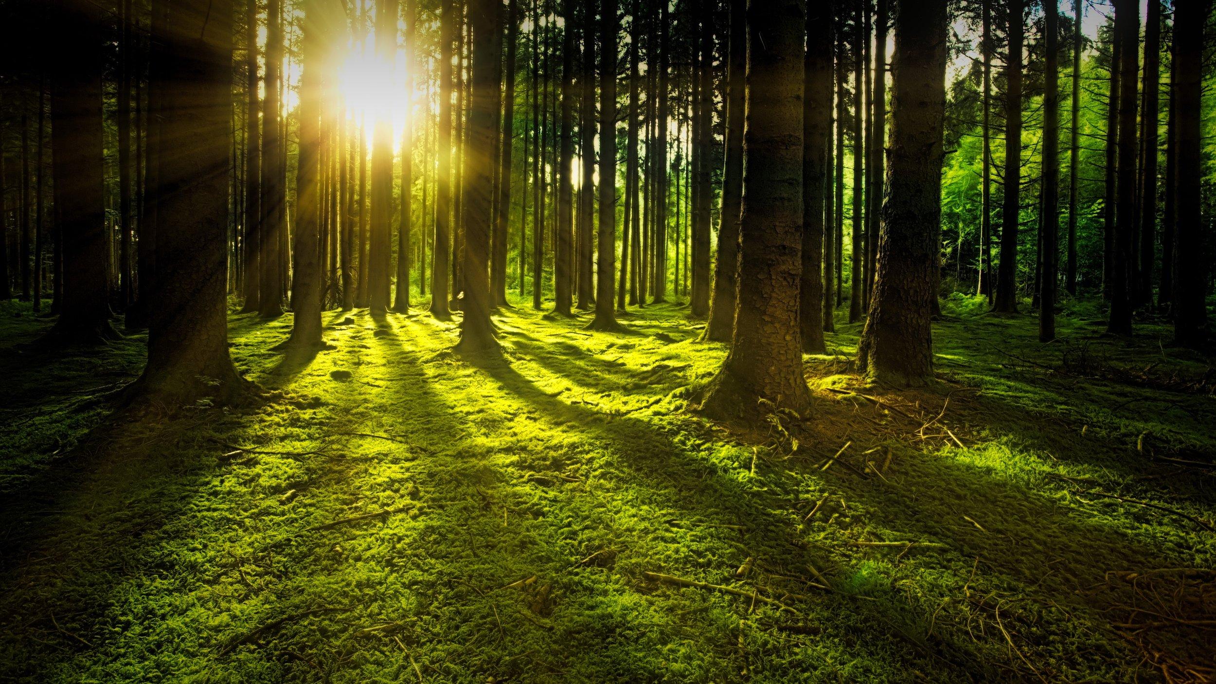 forest-grass-green-1125776.jpg