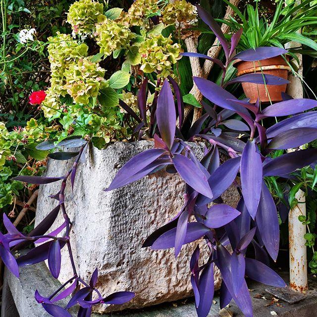 This purple is LUSH! 💜 #tulamala #travel #islandlife #hvar #croatia #purple #naturalbeauty #inspiration #walks #lovinglife