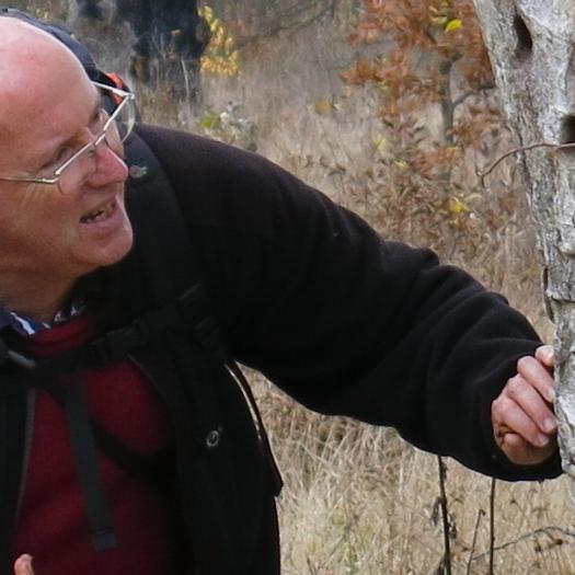 Keith investigating capricorn beetle holes in Romania