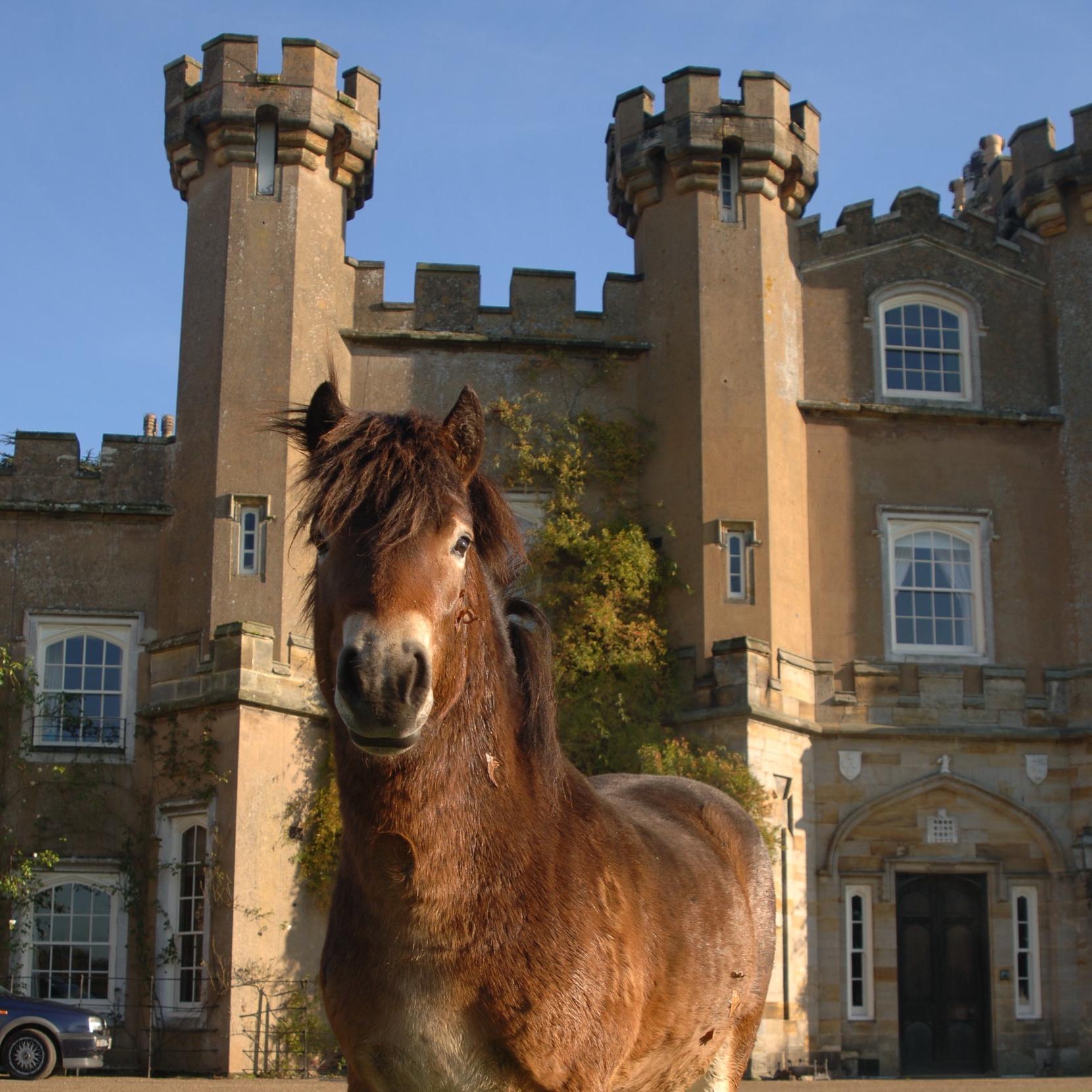 Duncan the Exmoor stallion as a young man  2136x3216.JPG