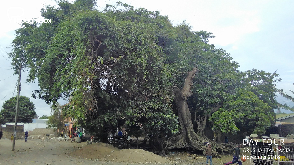 The 'meeting tree' - an extraordinarily wise tree used as a gathering place and meeting space for the local community.