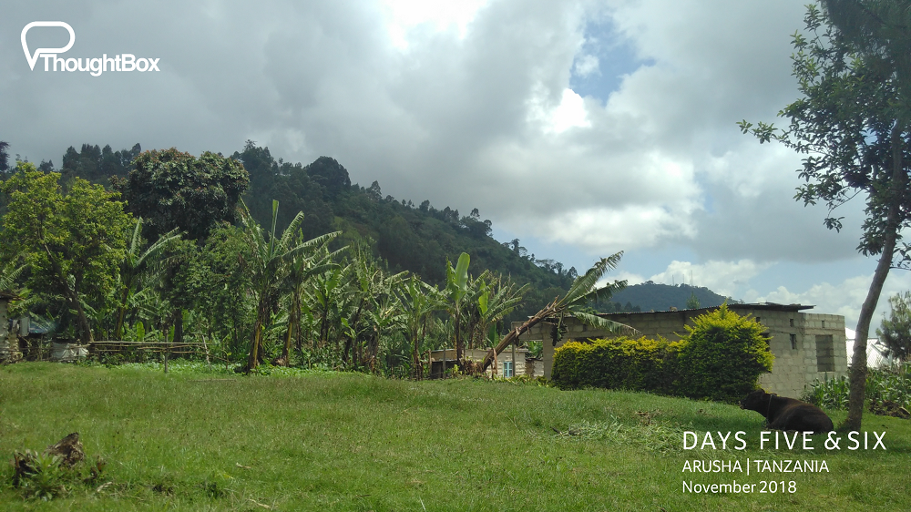 Some of the (many) banana groves in the area.