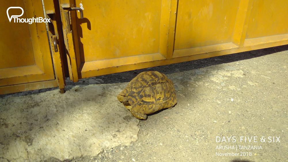 Meet Ethel, the resident tortoise of our house :)