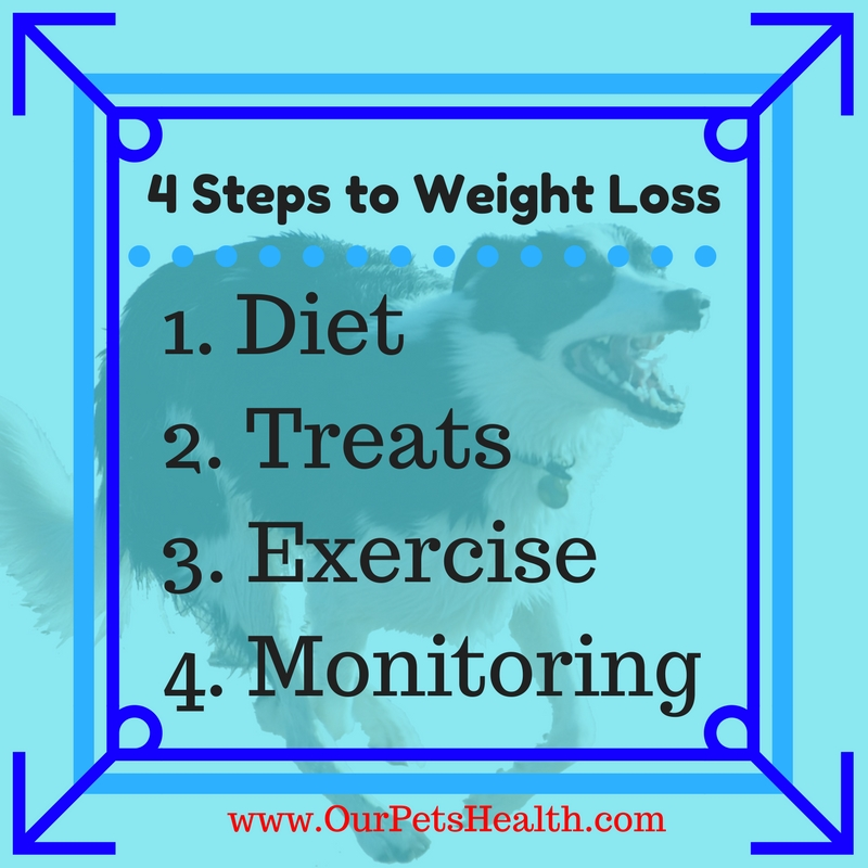 4 Steps to weight loss.jpg