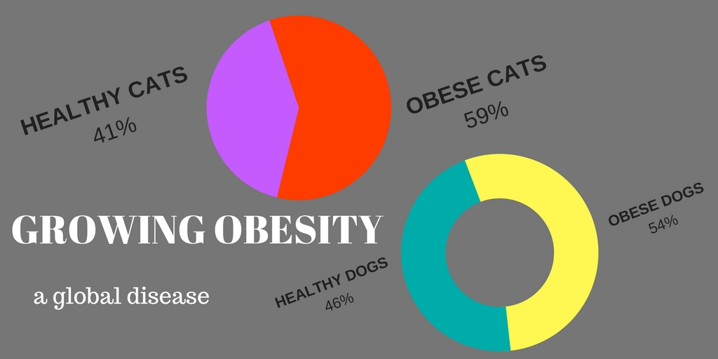 obesity is a serious, growing, global problem in our pet population