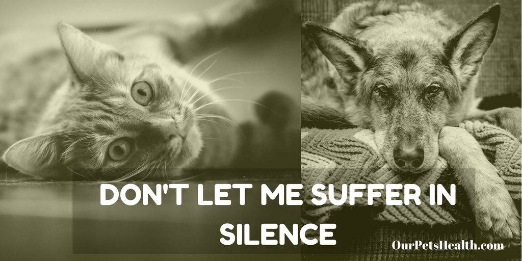 old dog and cat with arthritis, don't let me suffer in silence poster