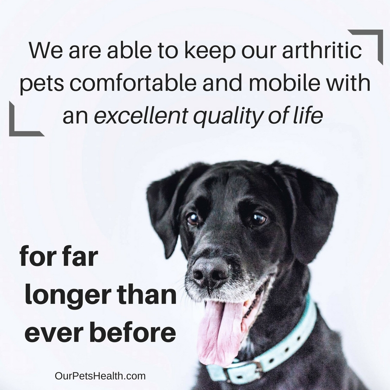 poster saying We are generally able to keep our arthritic dogs and cats comfortable and mobile with an excellent quality of life for far longer than ever before