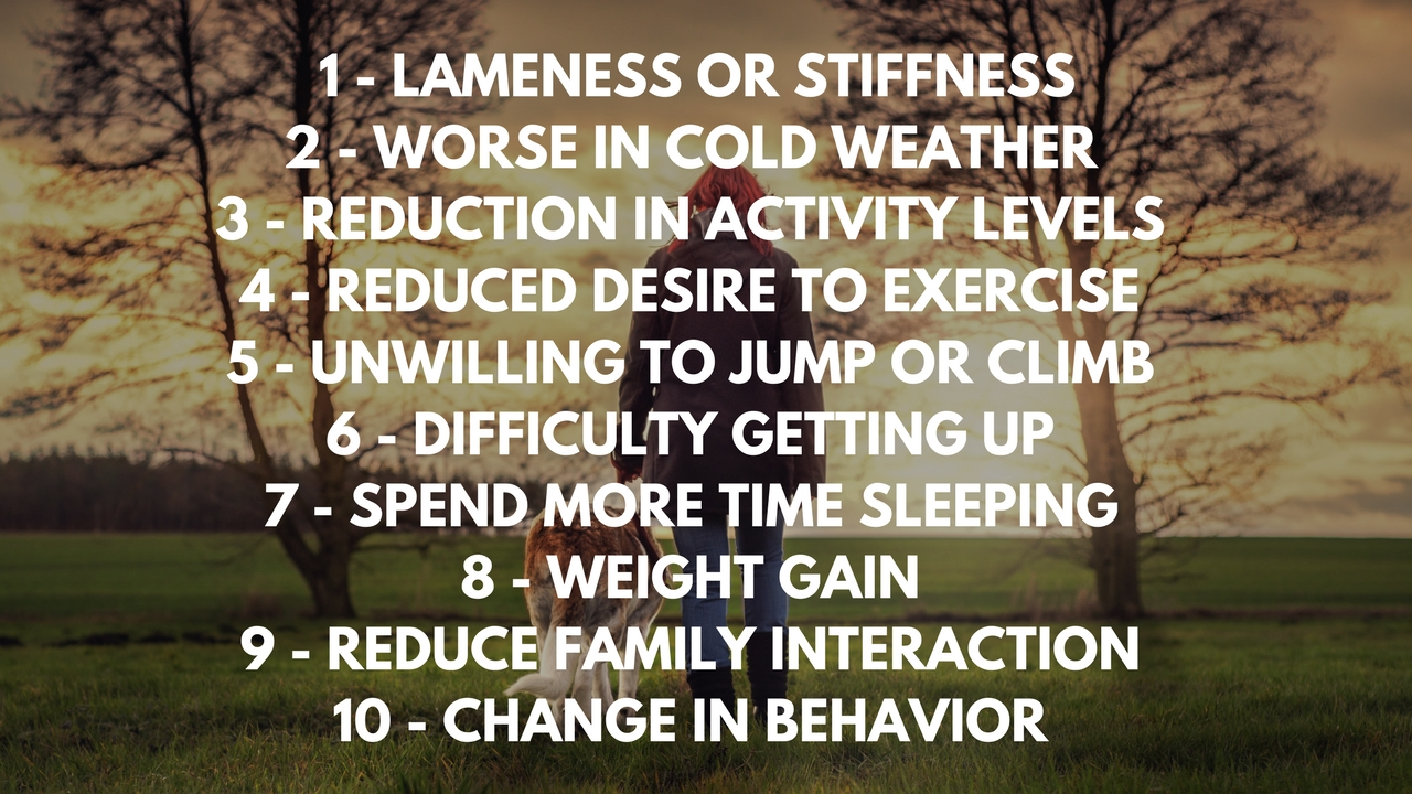 signs of pain in dogs include  1 - LAMENESS OR STIFFNESS 2 - WORSE IN COLD WEATHER 3 - REDUCTION IN ACTIVITY LEVELS 4 - REDUCED DESIRE TO EXERCISE 5 - UNWILLING TO JUMP OR CLIMB 6 - DIFFICULTY GETTING UP 7 - SPEND MORE TIME SLEEPING 8 - WEIGHT GAIN 9 - REDUCE FAMILY INTERACTION 10 - CHANGE IN BEHAVIOR