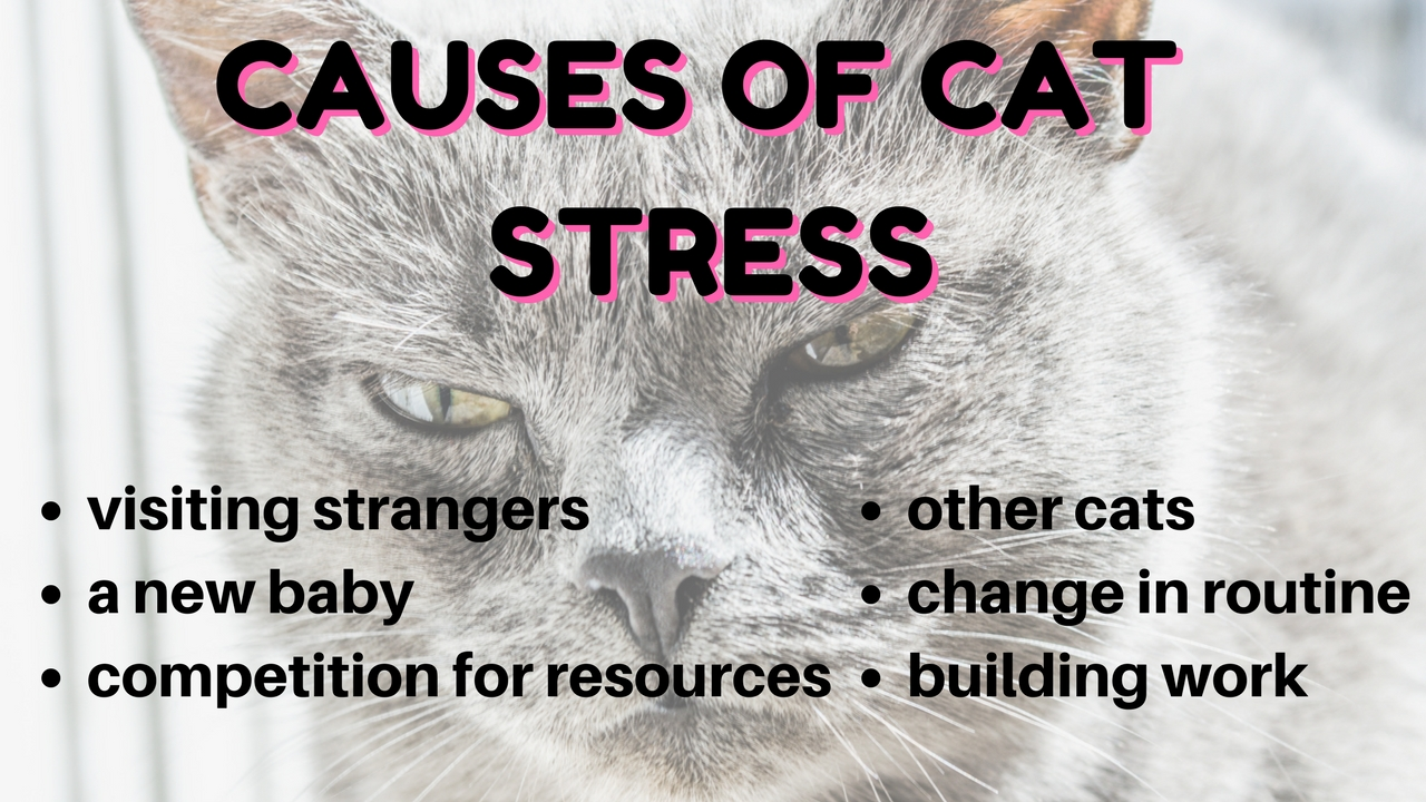 causes of stress in cats