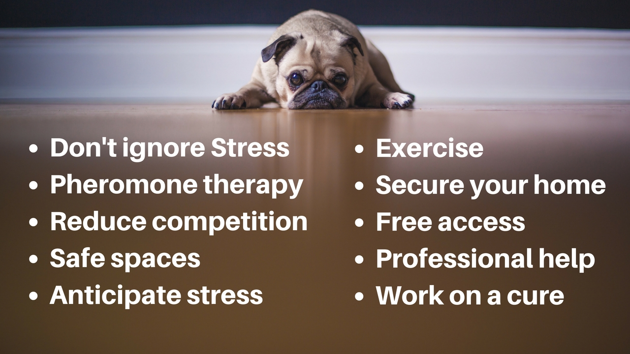 stress busting tips for dogs and cats