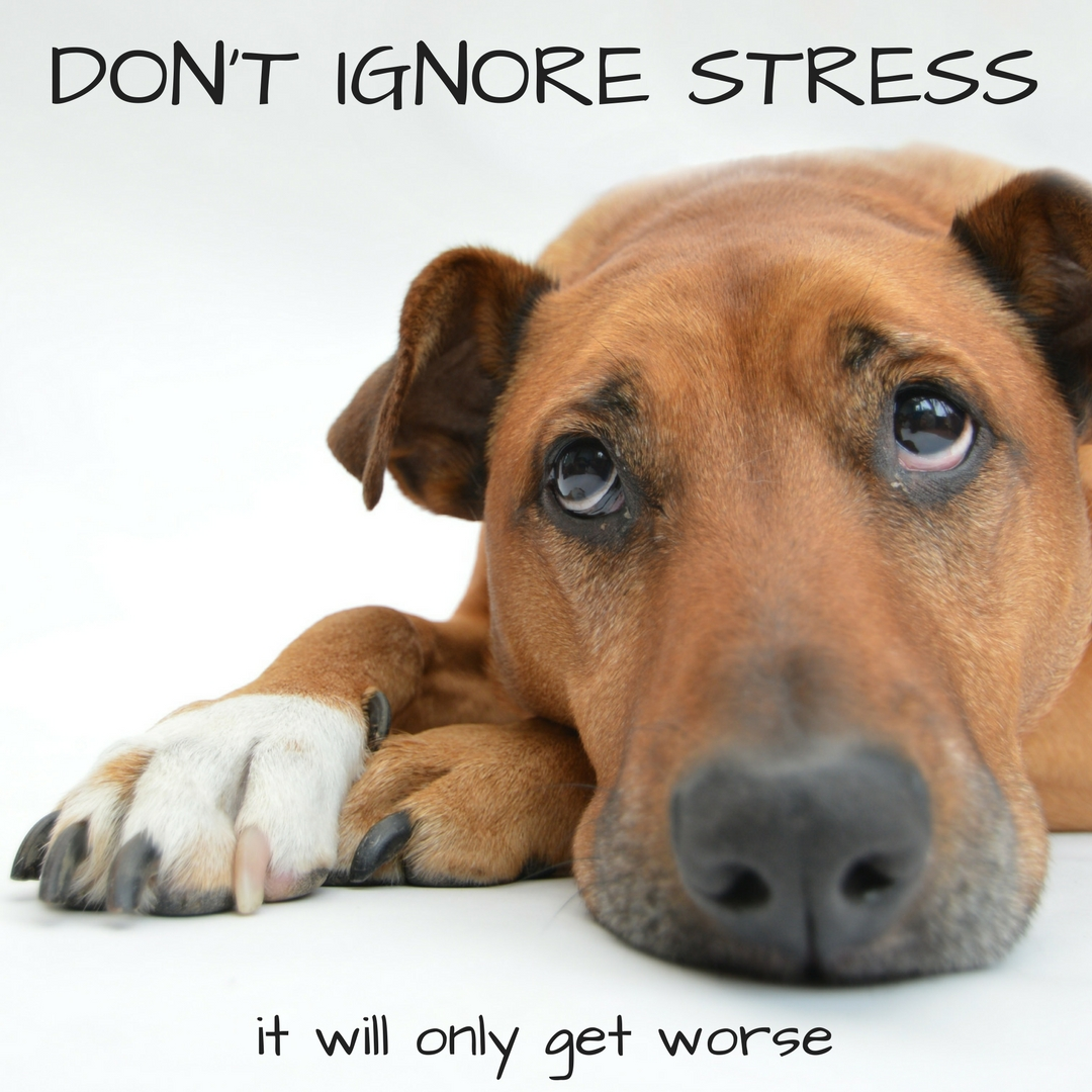 DON'T IGNORE STRESS, it will only get worse
