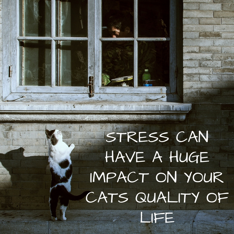 STRESS CAN HAVE A HUGE IMPACT ON YOUR CATS QUALITY OF LIFE. USE THESE 7 STRESS BUSTING TIPS TO REDUCE STRESS IN CATS