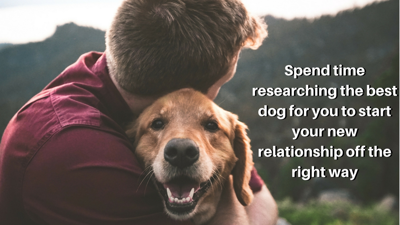 Spend time researching the best dog for you to start your new relationship off the right way
