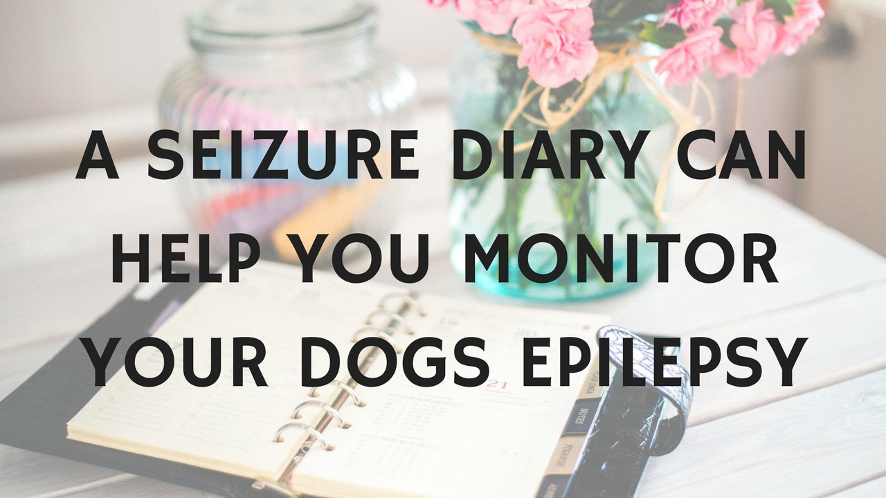 use a seizure diary to keep track of your dogs epilepsy and seizure frequency. It can help understand if their epilepsy is well controlled