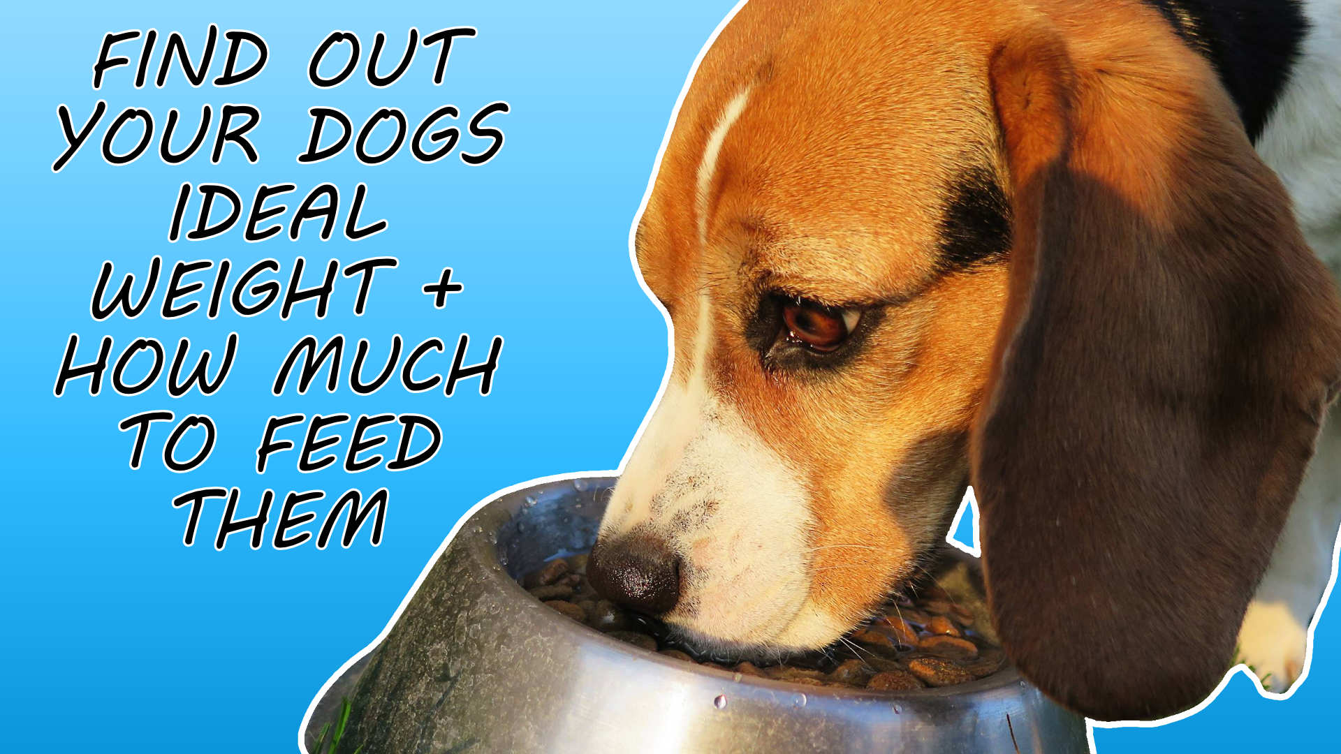 find out your dogs ideal weight and exactly how much food to feed them