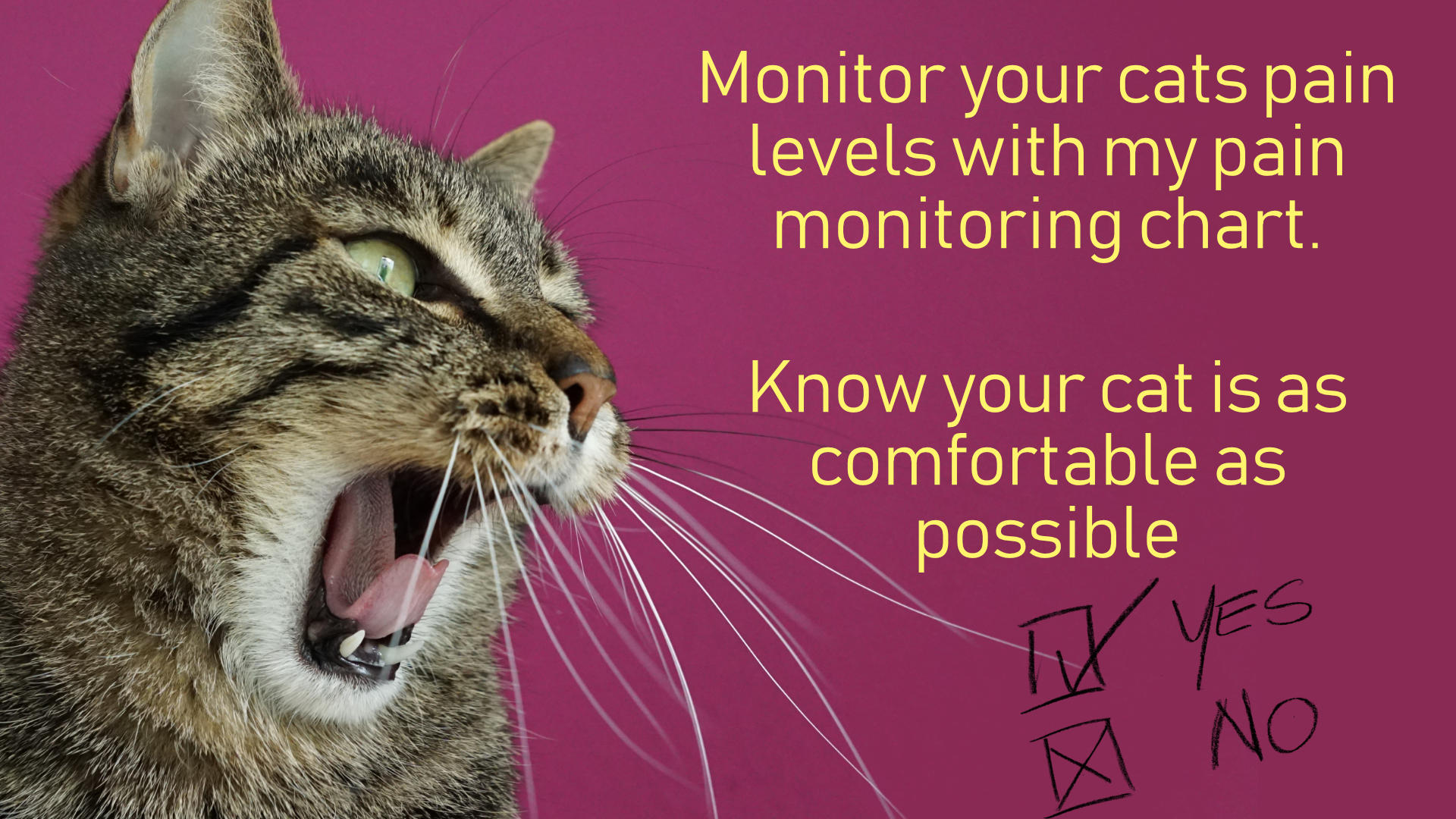 make sure your cat is not painful with my pain monitoring chart