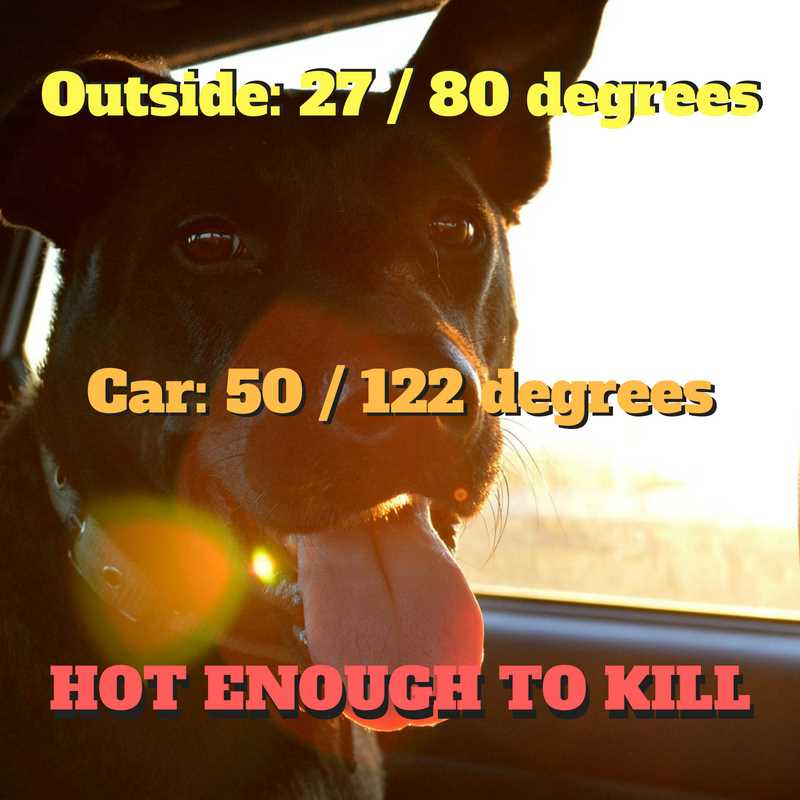 it doesn't need to be that hot outside for the temperature in a parked car to become deadly to a dog