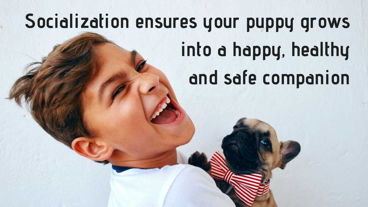 Proper early puppy socialization ensures your puppy grows into a happy, healthy and safe family dog and companion