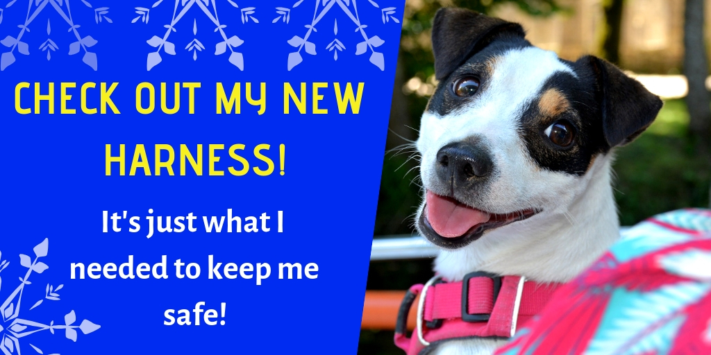 a new harness is the perfect Christmas gift for dogs to keep them safe