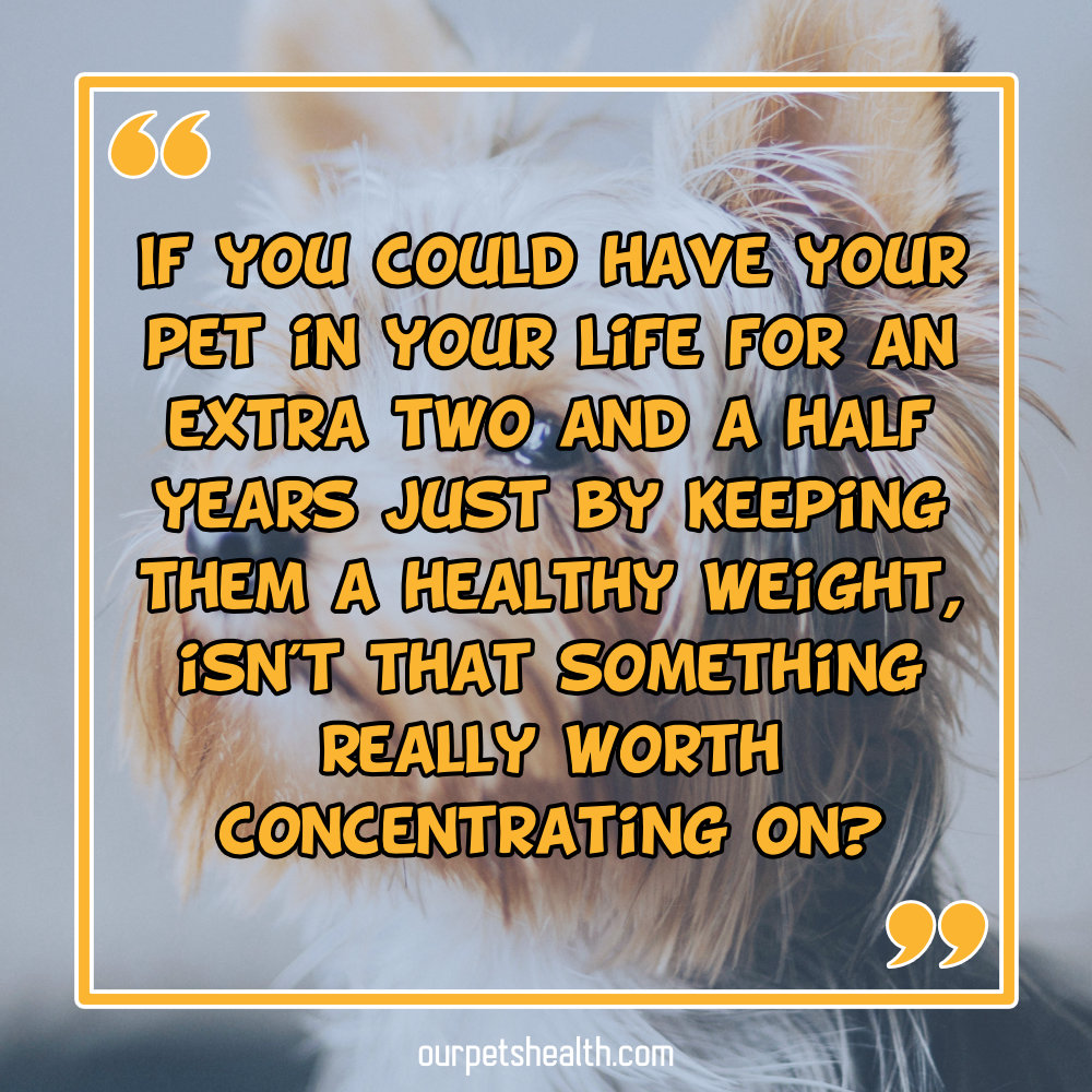 If you could have your pet in your life for an extra two and a half years just by keeping them a healthy weight, isn't that something really worth concentrating on?