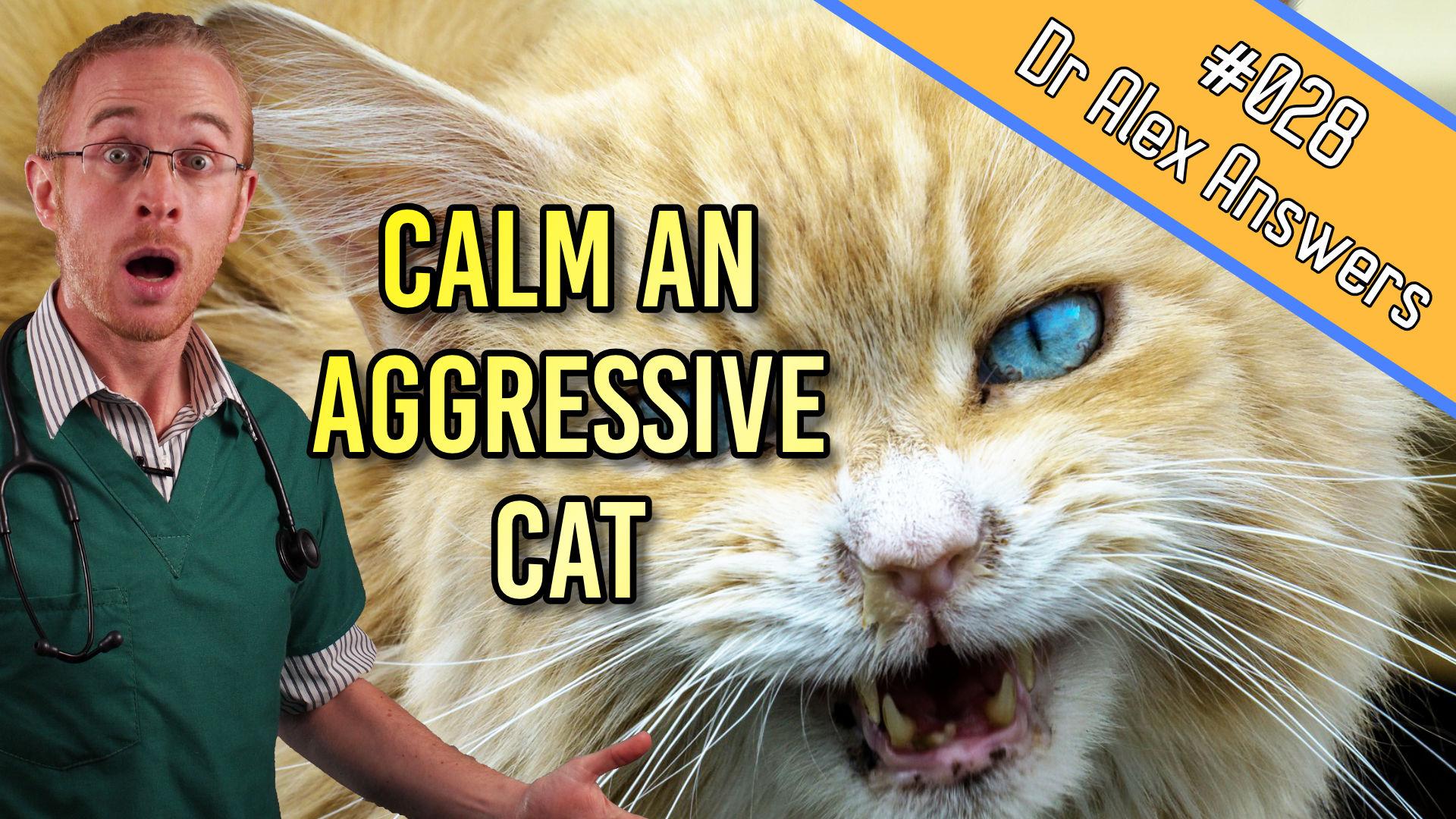 DAA calm aggressive cat.jpg