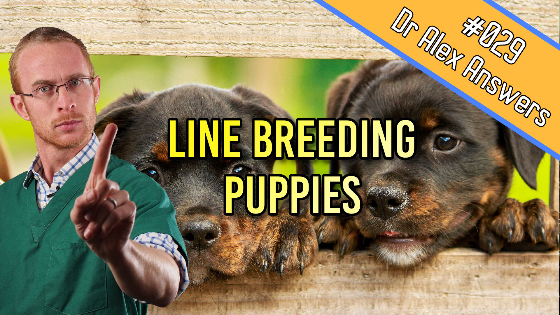 DAA line breeding.jpg