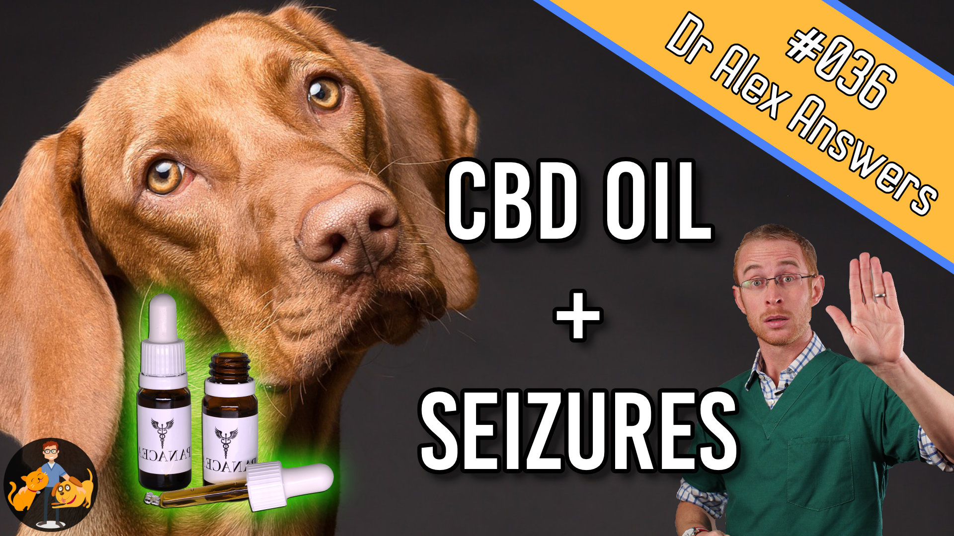 dog with caption cbd oil and seizures