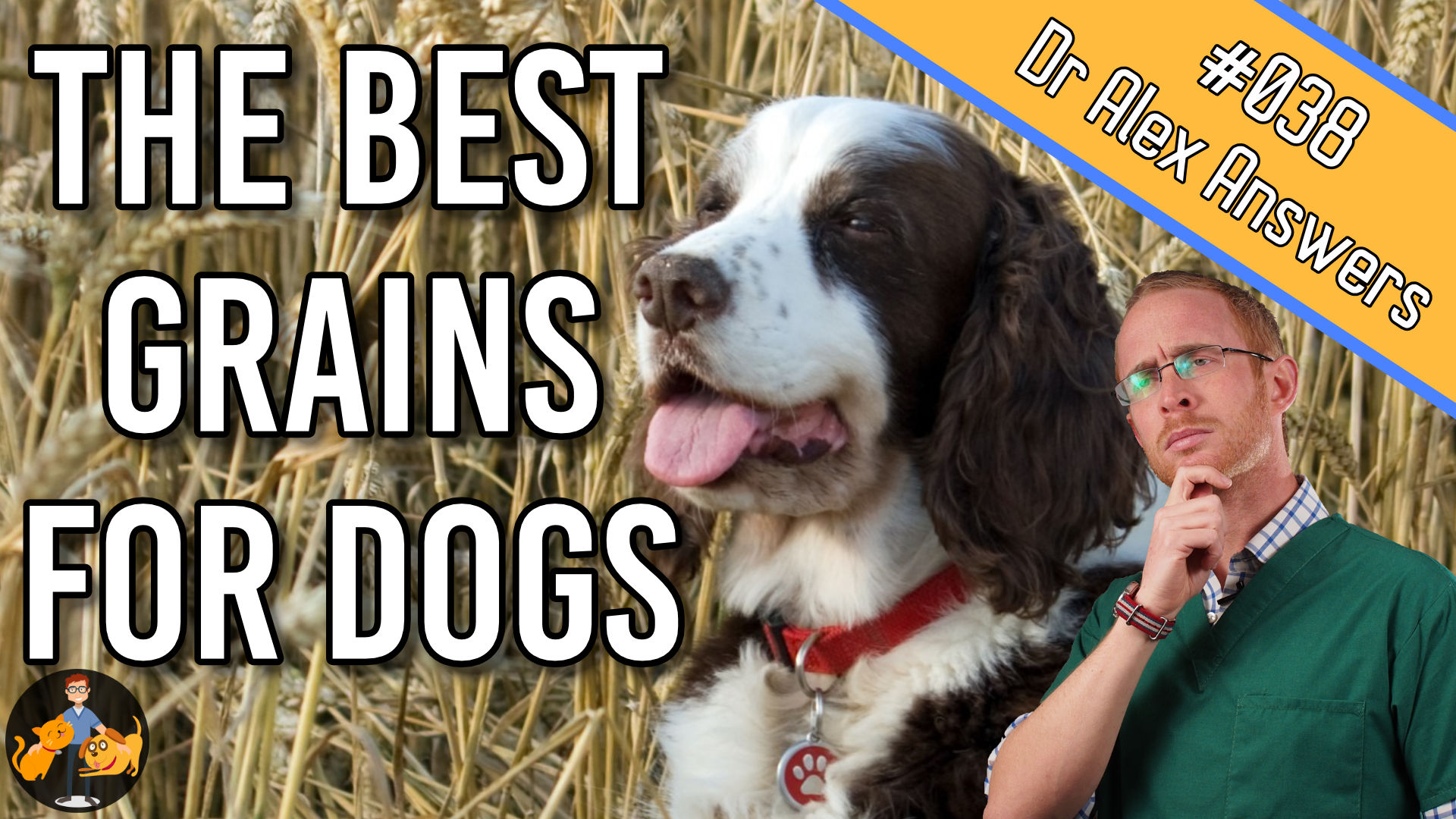 the best grains for dogs - can dogs eat grains