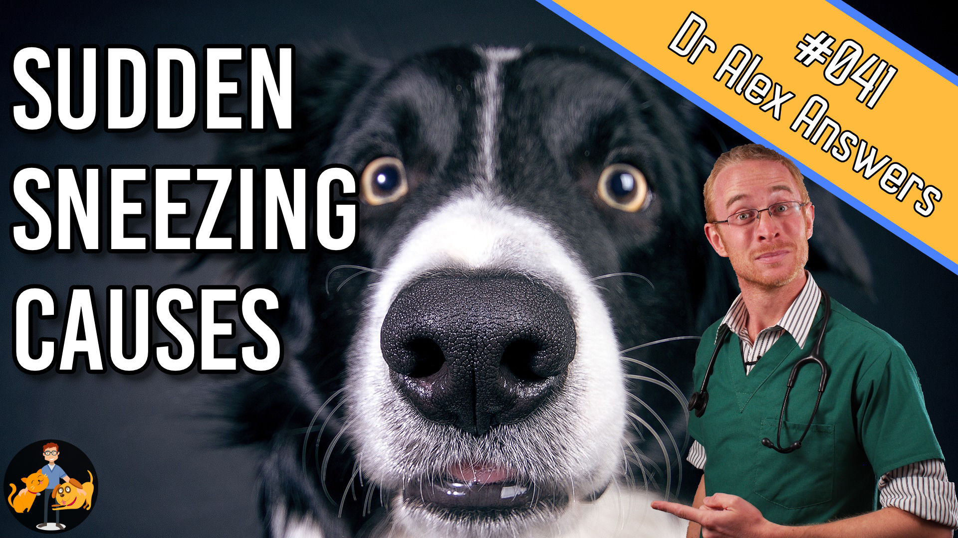 causes of sudden sneezing on dogs